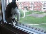 un chat renversant