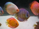 DISCUS BAC COMMUNAUTAIRE 1000 LITRES