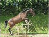 Aramis je t'aime mOn cheval d'amOur !