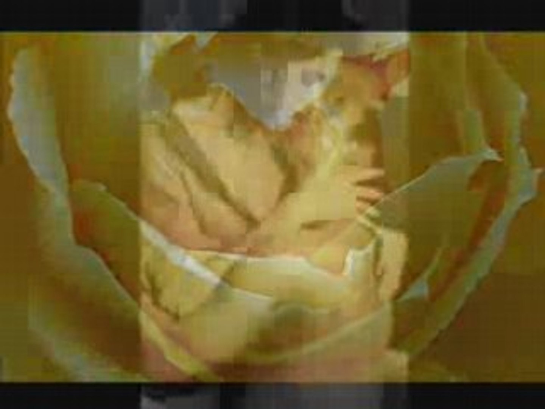 Roxette-Fading Like A Flower-(prevod)