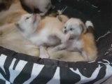 Jeux de petits chatons - 3 semaines
