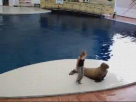 Das tanzende Walross