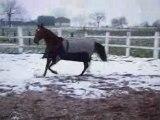 2008_0323_1742 Petit cabrer et galop dans la neige