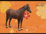 Quelques races de chevaux dans les jeux Alexandra Leder