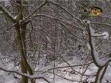 La Forêt de Soignes sous la neige (musical)