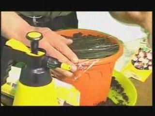 Radis en Intérieur  - Conseil Jardinage