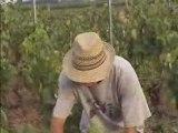 Une journée dans les vignes