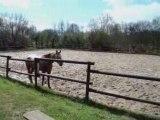 équitation éthologique, descendre de cheval en sécurité