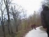 Balade VTT dans le Gros Bois ...