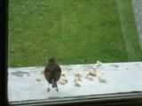 Le repas des oiseaux (mercredi 9 avril 2008)