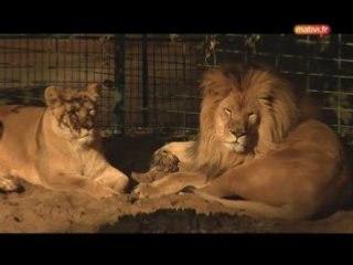 Visite du zoo de la Palmyre