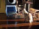 Bataille de chats