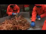 Deadliest Catch - Quick Catch 14