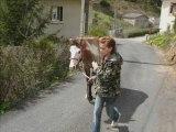 étalon paint horse de xavier 2