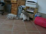 Aubade et ses chatons 2008