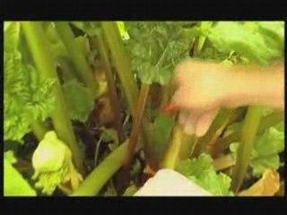 Visionnez les Cours Vidéo de Apprendre � cultiver la rhubarbe