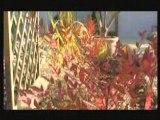 Paysagiste, aménagement extérieur : aménager un jardin exotique, création de jardin, entretien jardin.