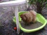 anakin dans sa piscine