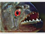 Piranhas - Piranha adventure - Fish Piraya, Cariba Attack