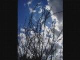 Diaporama fleurs anniversaire et chat 23.04.08