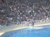les dauphins en spectacle..