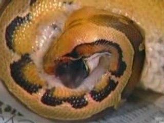 Super serpents 02