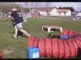 Championnat Agility Poitou-Charentes & GPF  2008