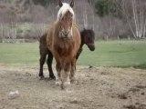 Menaces du cheval + Jumeau + Poulains ...