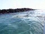 otaries lions de mer aux galapagos