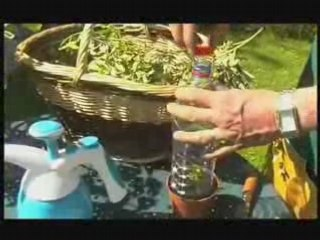Visionnez les Cours Vidéo de Boutures sur plantes Herbac�es - Cours de jardinage