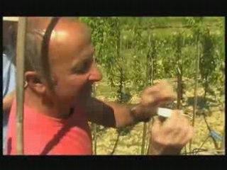Visionnez les Cours Vidéo de La Greffe - Cours de jardinage