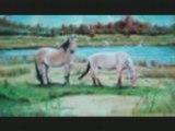 cheval / chevaux
