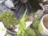 mise à eau dans le bassin