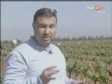 Maroc   arboriculture et vignoble de Meknès
