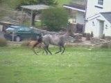 Channing Quarter Horses