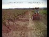 Labour de la vigne en Languedoc-Roussillon (mai 2008)