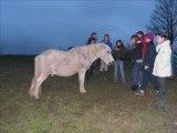Homage aux poneys retaité...