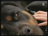 Kaya rottweiler condamnée à mort