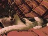 Mimi le chaton III : chaton VS chaton