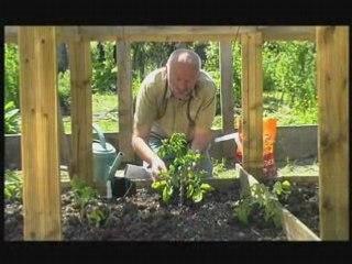 Visionnez les Cours Vidéo de Faire pousser des tomates