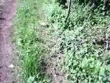 rando mai 2008 zone 1 (foret de ligniere)