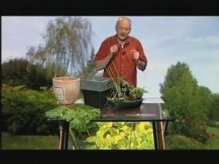 Visionnez les Cours Vidéo de Herbes Aromatique - Cours de Jardinage