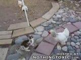 Baston _ les poulets interviennent