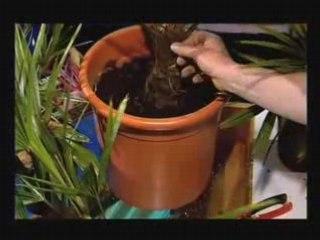 Plantes du sud - Conseil Jardinage