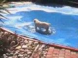 Trop cool la piscine bachée