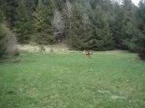 Ski sur herbe vers Bourg St Maurice Savoie