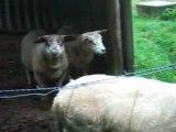 26-06-2007 MESA au cours du parcors les moutons