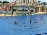 Les dauphins au Marineland d'Antibes 2