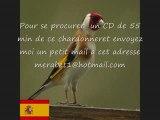 CD Chant de chardonneret d'ESPAGNE COPIA