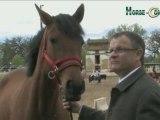 Horse Concept  et horse coaching ( Horse-coaching )